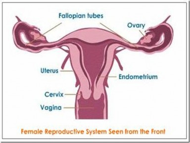 Half of young women cant find their vagina shape magazine when edmondo de amicis said every woman is a mystery he probably didnt mean to ourselves time to break out the anatomy chart ladies ccuart Image collections