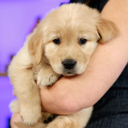 22 Adorable Dog Breeds In The Puppy Bowl 2014