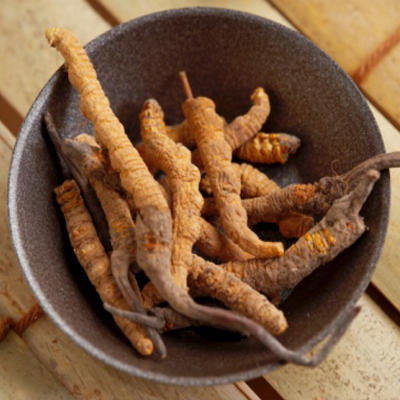 cordyceps for muscle pain and sore muscle relief