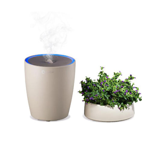 essential oil diffuser and plant
