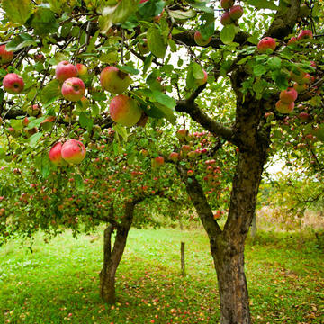 The Definitive Guide To Fall Apples