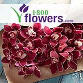 Shop 1-800-Flowers